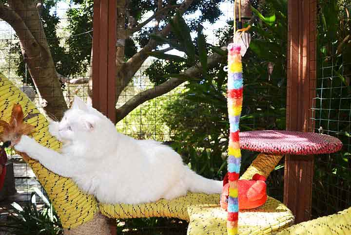 Cat-Villa cat tree - Vishnu with tease